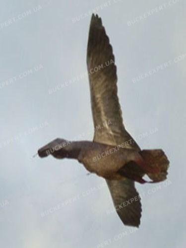 Воздушный змей  ARtechnology Кряква