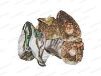 Чучела Cherokee Sports кряквы надувные