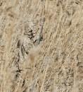 Костюм Jahti Jakt Forest Reed Camo камыш демисезонный
