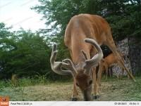 Камера регистратор слежения за животными Bushnell Trophy Cam HD