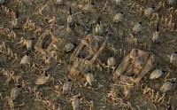 Костюм Yukon Mossy Oak Duck Blind с мембраной